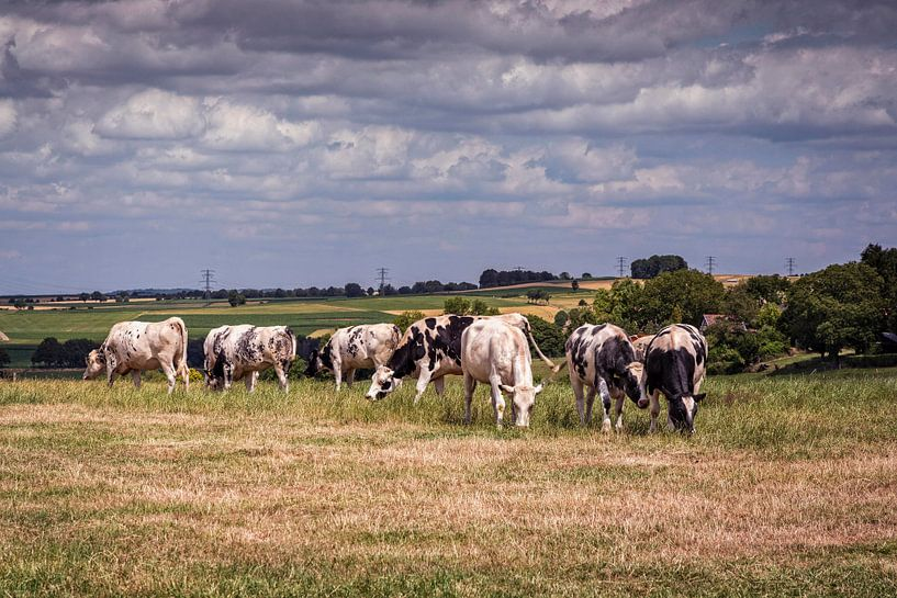 Kühe auf dem Keutenberg von Rob Boon