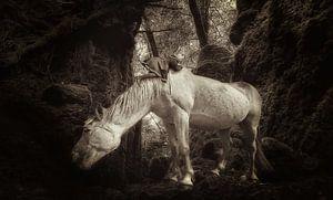Horse in the Woods van