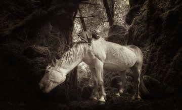 Horse in the Woods van Juliën van de Hoef