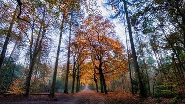 Baarnse Bos van Bart Uijterlinde