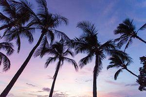Palmbomen op Hawaii van