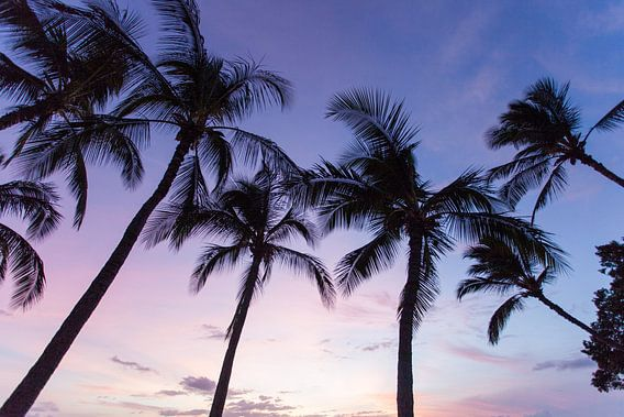 Palmbomen op Hawaii