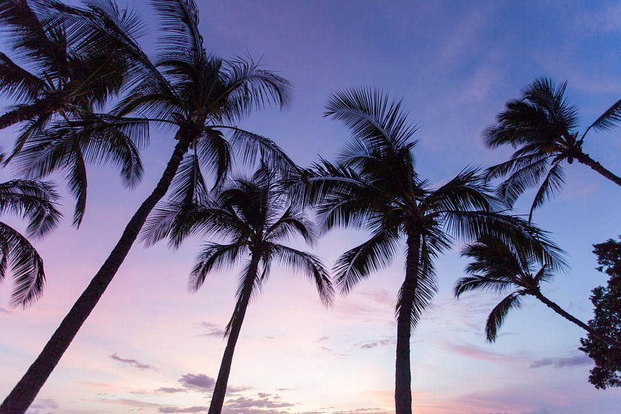 Palmbomen op Hawaii van Milene Bezemer