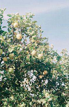 Citroen bomen in Zuid Afrika | Botanische foto print voor aan de muur van Emma van der Schelde