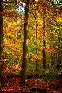 Herbstzweig von natascha verbij