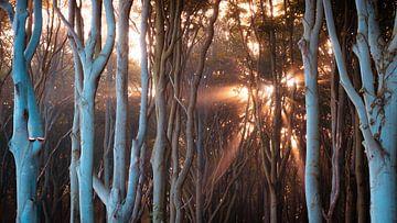 Licht in het Spookbos