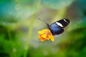 Vlinder von Angela R.