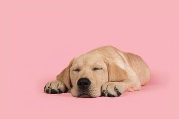 Sleeping beauty von Elles Rijsdijk