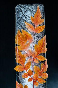 bladeren bevroren in water van Wilfried-Reinhard Köhn