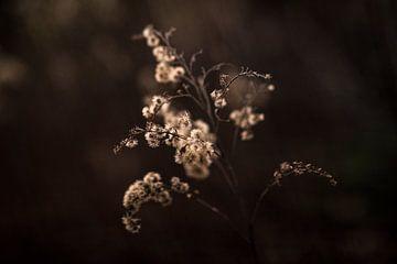 Plant in avondlicht van Manja Herrebrugh - Outdoor by Manja