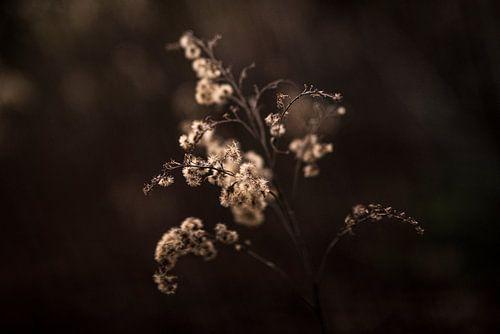 Plant in avondlicht
