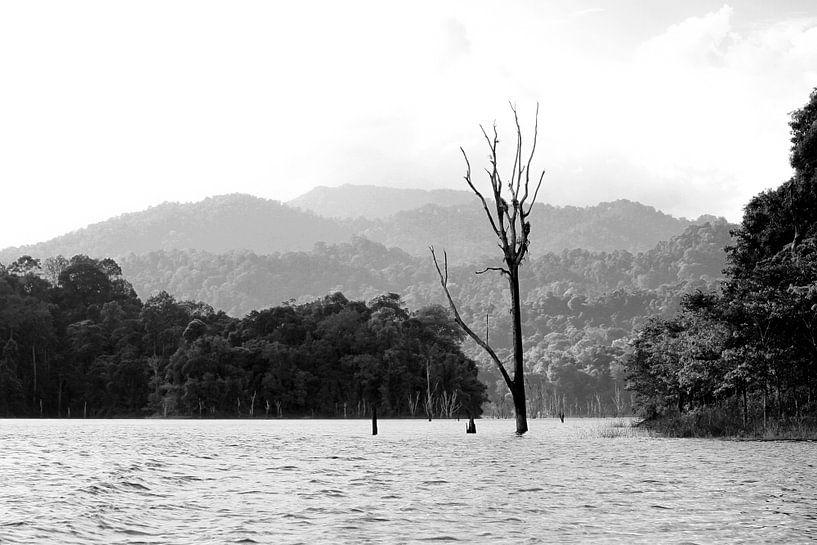 Khao Sok Nationalpark von Levent Weber