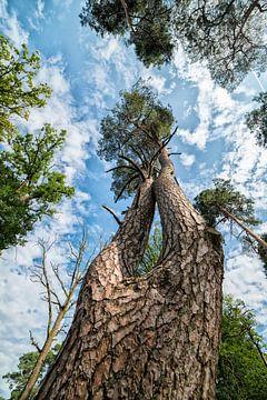 L'arbre sur le Veluwe sur Michel Groen