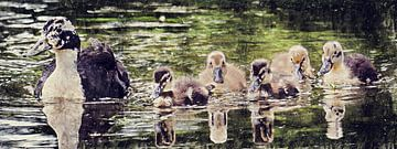 Moeder eend met jonge eendjes (panorama) (schilderij) van Art by Jeronimo