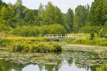 Seerosen und Brücke im Arboretum Poort Bulten bei De Lutte von Peter Apers