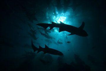 Haaien in silhouet van Jaap Voets