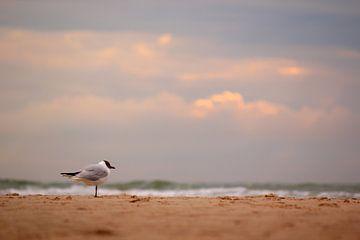 Meeuw op het strand bij zonsondergang (1) van Ingrid Meuleman