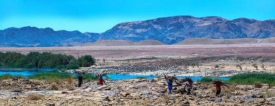 Takken dragers langs de Oranjerivier in Namibië