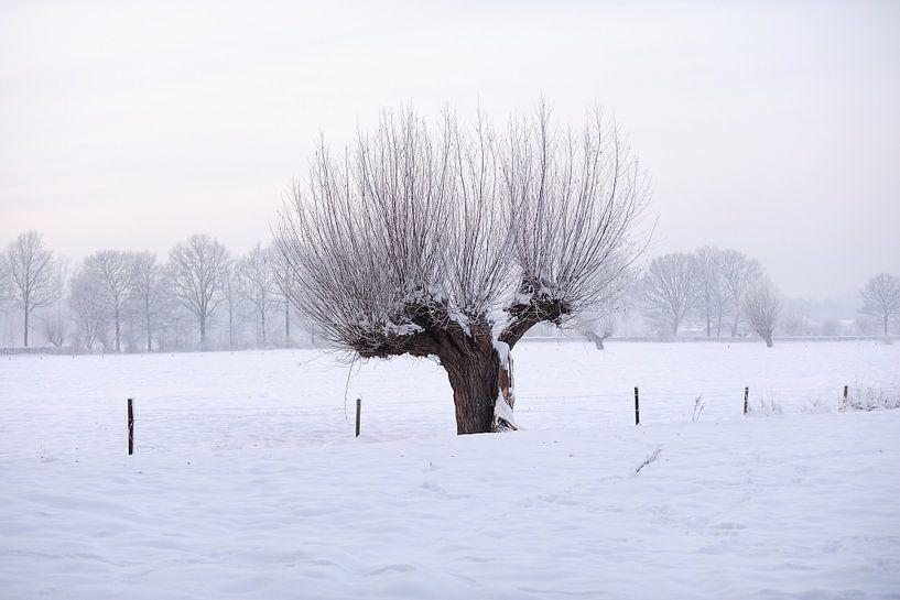 Knotwilg in winters landschap van Merijn van der Vliet