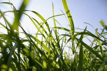 Close-up van fris groen gras in april met contrasterend zonlicht van Maarten Pietersma