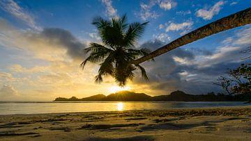 Sonnenuntergang unter Palmen von Denis Feiner