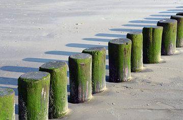 Grüne Stöcke am Meer Ameland von Ellinor Creation