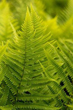 Bohemian Design mit grünen Farnen, Fine Art Makro Foto von Karijn | Fine art Natuur en Reis Fotografie