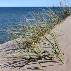 Meeresblick von Ostsee Bilder
