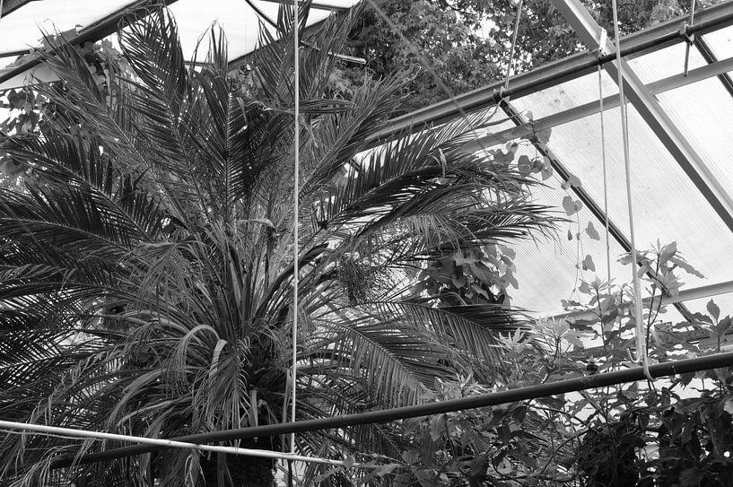 Botanisch 1 van True Color Stories