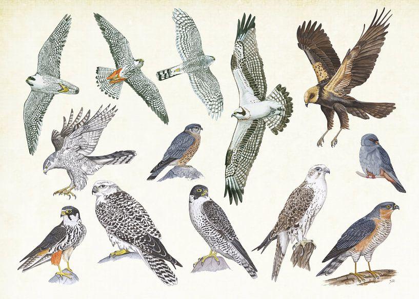 Roofvogels van Jasper de Ruiter