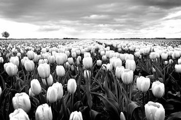 Tulpen, Niederländisch Landschaft (Schwarz-Weiß) von Rob Blok