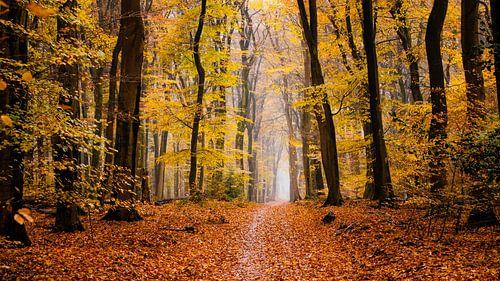 Droom van de herfst van Tvurk Photography
