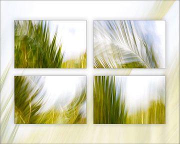 Vent et palmiers sur Jacqueline Lemmens