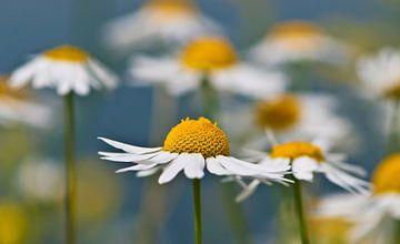Het is weer lente... van Dennis Langerak