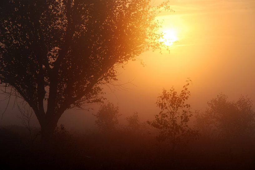 Zon in de mist van Esther's Photos