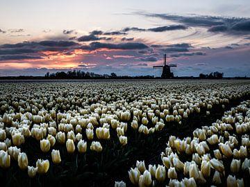 Hollands tulpenbeeld van Larissa Geuke