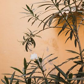 Gele muur Frankrijk van Amber den Oudsten
