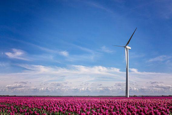 Dutch beauty  van Boas  van den Berg