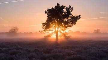 Magische ochtend - Loonse en Drunense Heide van Laura Vink