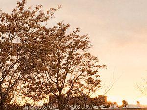 Sunset 2 van Eline