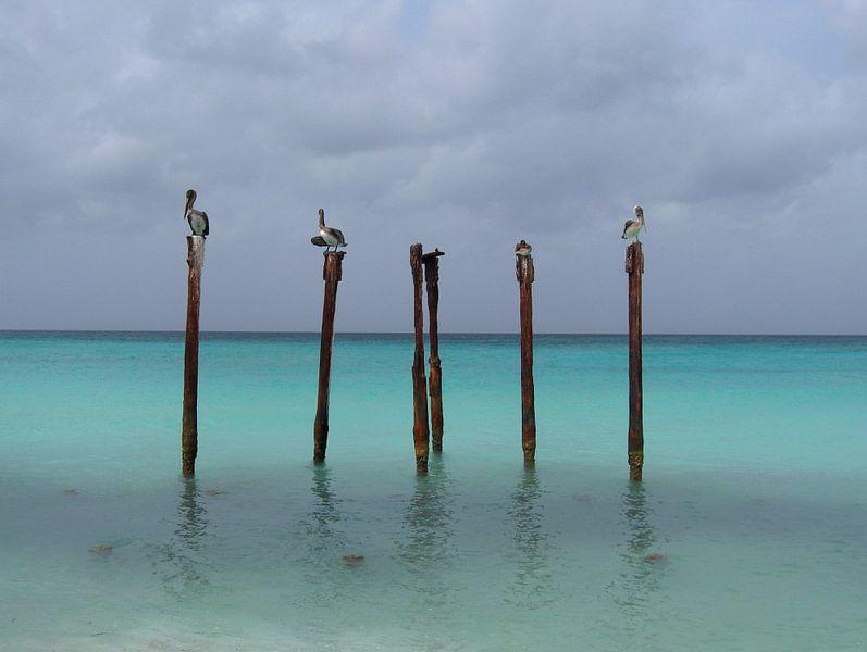 Birds of Aruba