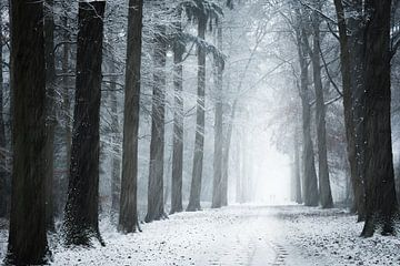 Sneeuwstorm in het bos van Fabrizio Micciche