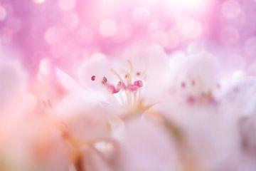 wilde kers roze van Ribbi The Artist