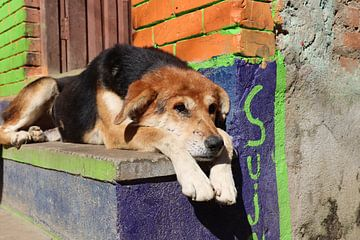 hond in Panauti Nepal van Marieke Funke