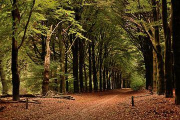 herfst in het bos van Petra De Jonge