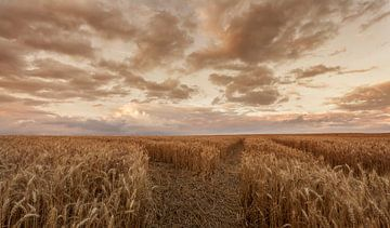 Zomeravond boven een korenveld in de buurt van Eys van