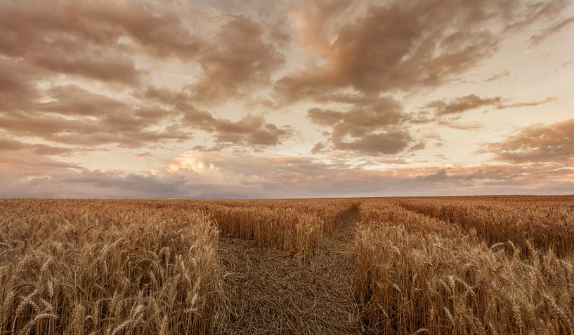 Zomeravond boven een korenveld in de buurt van Eys van John Kreukniet