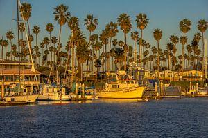 Ventura harbour van