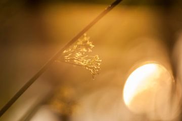Gras in het laatste zonlicht van Marianne Rouwendal