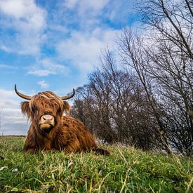 Highlander écossais sur Patrick Verhoef